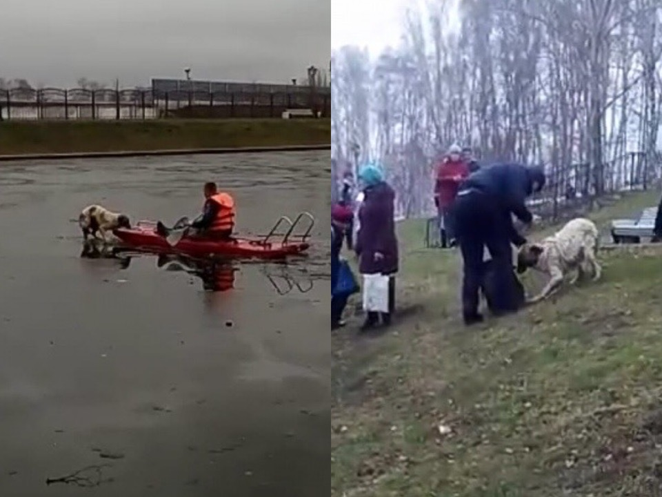 В Башкирии пожарные спасли собаку, застрявшую на тонком льду посреди пруда