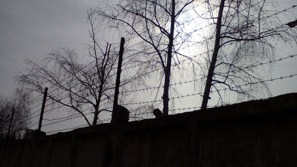 В Башкирию из иракской тюрьмы вернули двоих детей