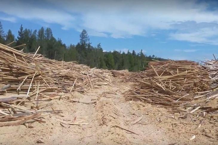 В экологической зоне Байкала обнаружили незаконный пункт заготовки древесины
