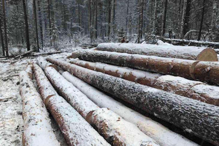 В Балаганском районе местный житель вырубил лес на 1,8 миллиона рублей