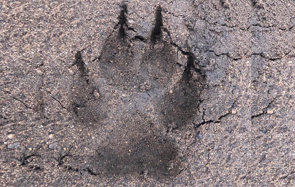В Башкирии стая волков вышли на берег реки, где рыбачил мужчина