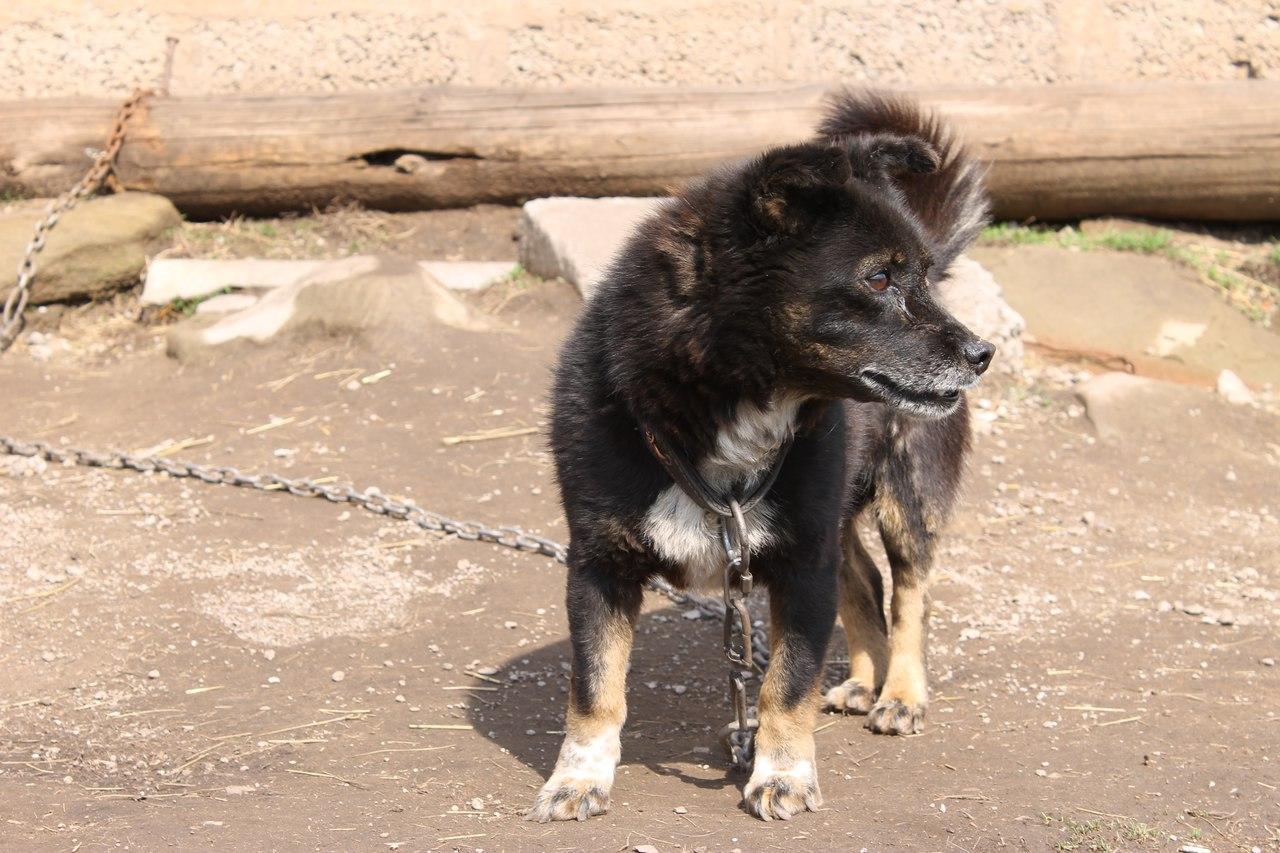Информация о растерзанном собаками в Уфе школьнике не подтвердилась